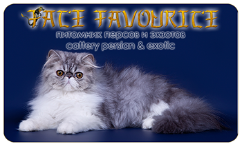 Fate Favourite cattery - Persian and Exotic